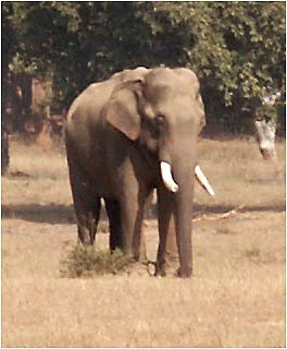 Elephant Wildlife Resorts