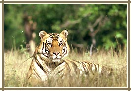 Bandhavgarh National Park, Wildlife Resorts India